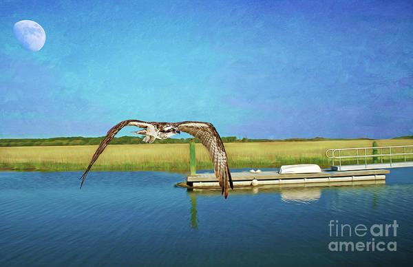 Osprey At Sapelo Poster