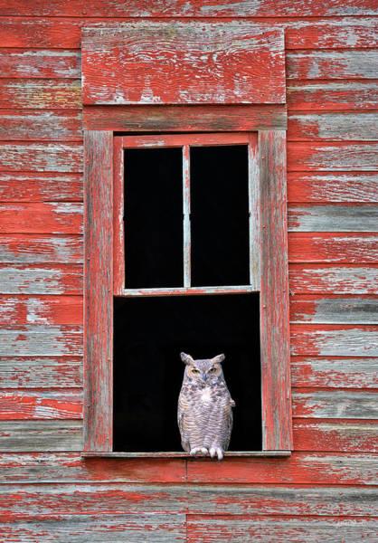 Owl Window Poster