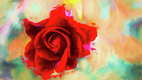 Painted Rose On Colorful Stucco Poster
