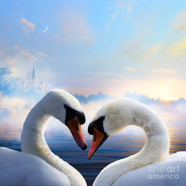 Pair Of Swans In Love Floating On The Poster
