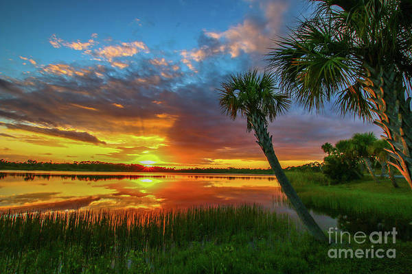 Poster featuring the photograph Palm Tree Sunset by Tom Claud