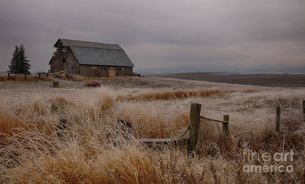 Palouse Frost Poster