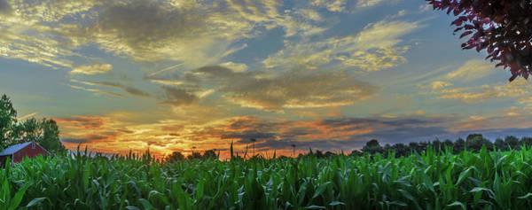 Panoramic Cornfield Sunset Poster