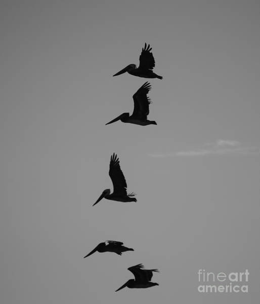 Poster featuring the photograph Pelican Silhouette  by Jeni Gray