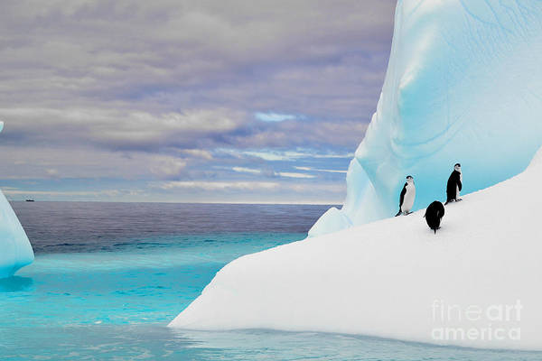 Penguins In Iceberg In Antarctica Pole Poster