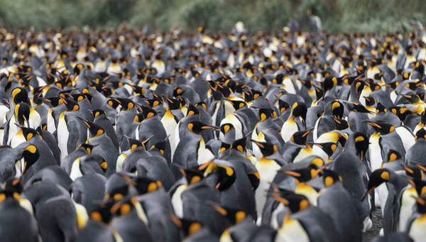 Penguinscape Poster