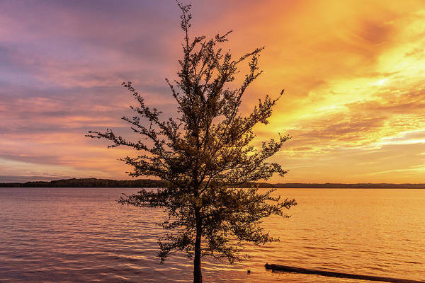 Percy Priest Lake Sunset Young Tree Poster