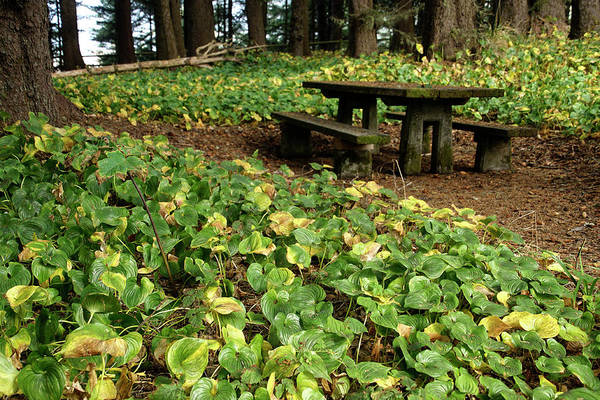Picnic  Table In The Forest  Poster