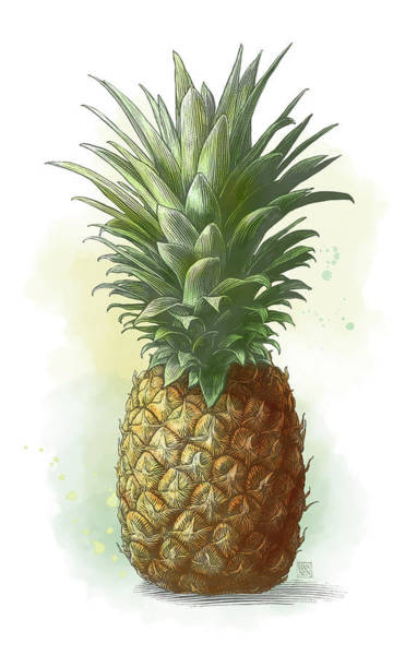 Poster featuring the drawing Pineapple by Clint Hansen