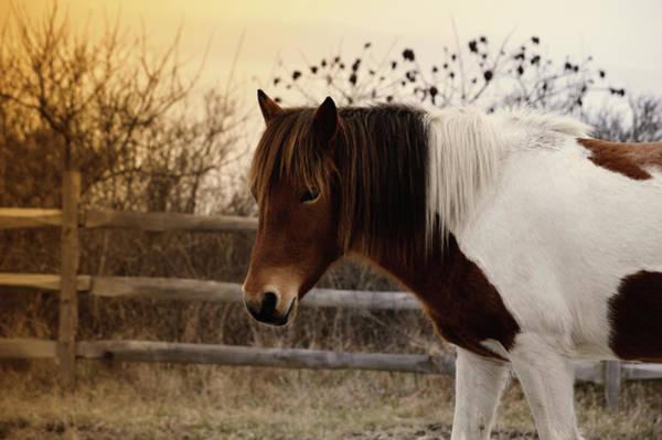 Pony Warm Up Poster
