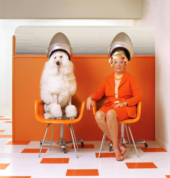Poodle And Senior Woman Sitting Under Poster