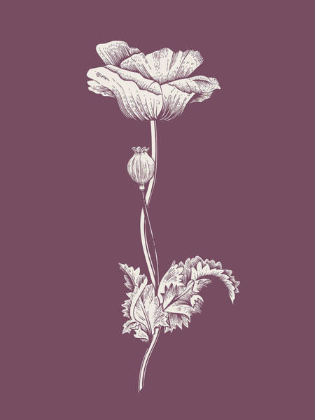 Poppy Purple Flower Poster