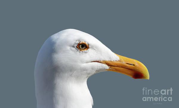 Pretty Western Gull In Profile Poster