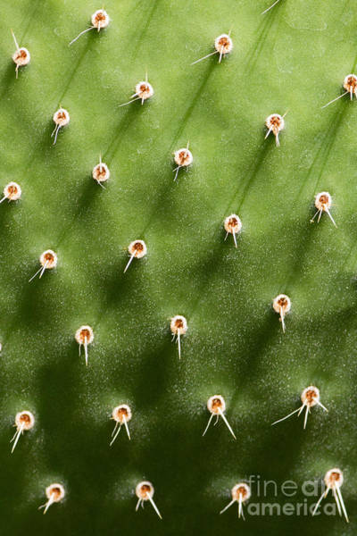 Prickly Pear Cactus Close Up Poster