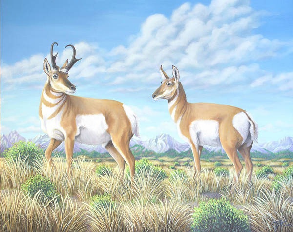 Pronghorn By The Tetons Poster
