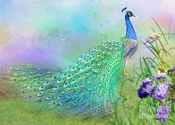 Proud Peacock Poster