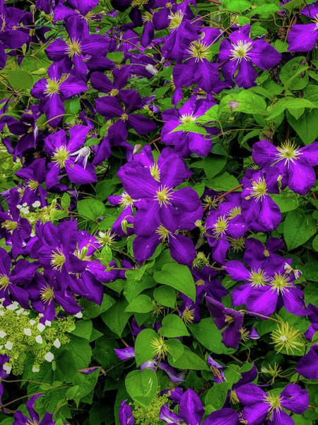 Poster featuring the photograph Purple Flowers by Lora J Wilson