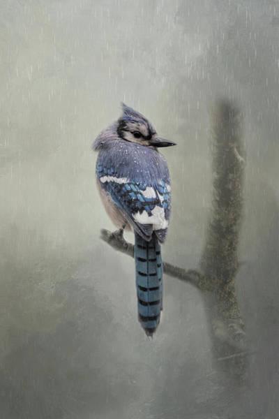 Rainy Day Blue Jay Poster