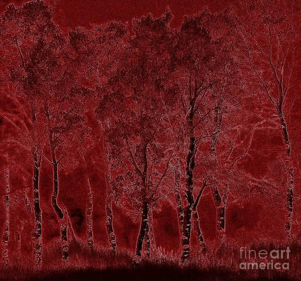 Red Aspen Grove Poster