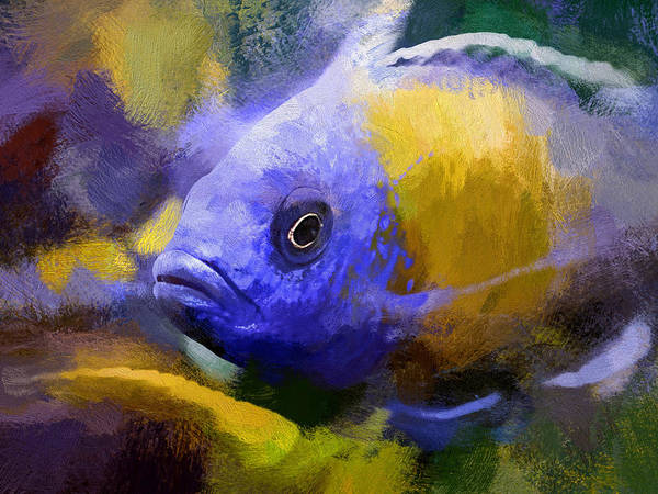 Red Fin Borleyi Cichlid Artwork Poster