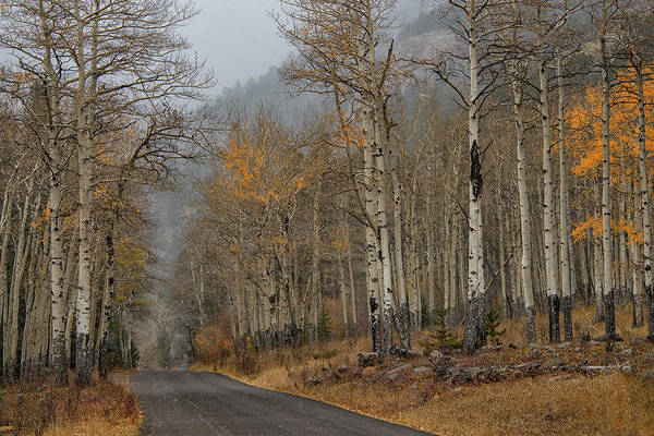 Poster featuring the photograph Remnants Of Fall by Darlene Bushue