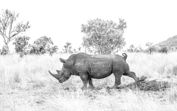 Rhino Business Poster