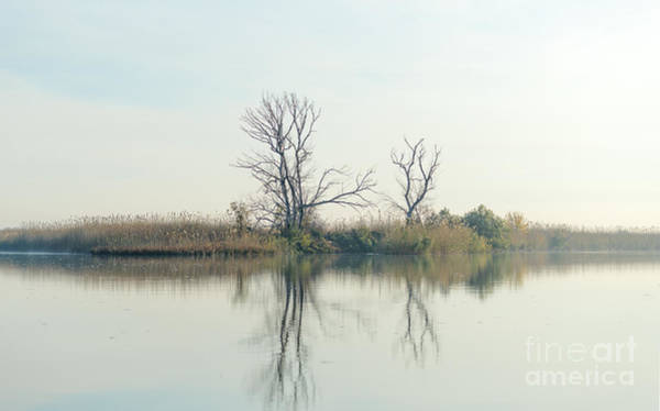 River With Tree Reflected In The Delta Poster