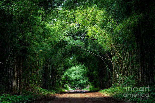 Road With Bamboo Poster