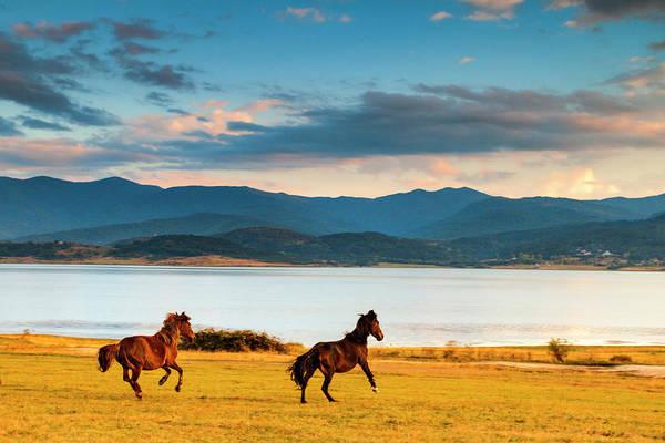 Running Horses Poster