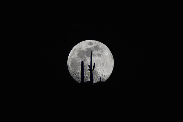 Poster featuring the photograph Saguaro Moon Silhouette  by Chance Kafka