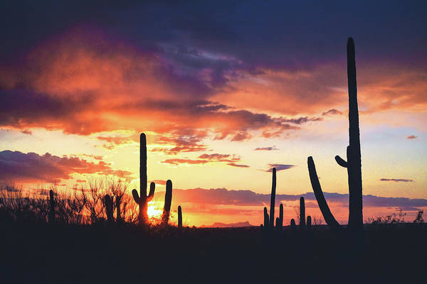 Poster featuring the photograph Saguaros Watch The Sunset by Chance Kafka