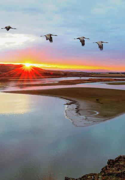 Sandhill Cranes At Scooteney Reservoir Wa Poster
