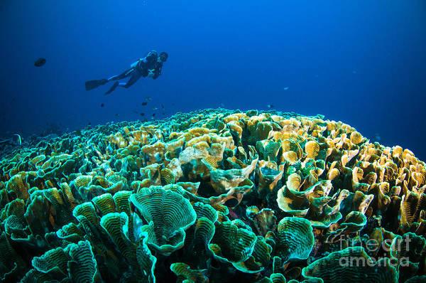 Scuba Diving Above Coral Below Boat Poster