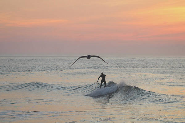 Seagull And A Surfer Poster