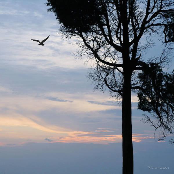 Seagull Sunset At Catawba Poster
