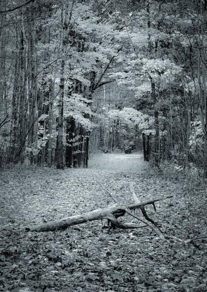 Selenium Trail  Poster
