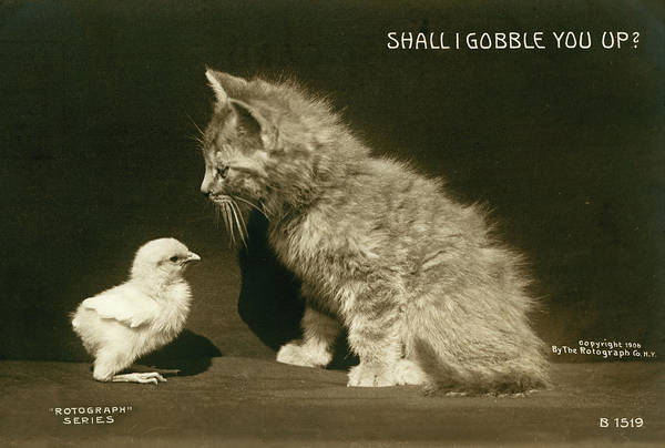 Shall I Gobble You Up?  Poster