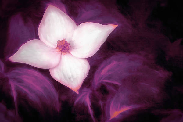 Single Dogwood Flower Purple Poster