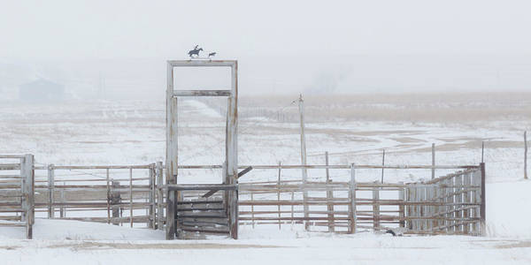 Poster featuring the photograph Snow And Corral 01 by Rob Graham