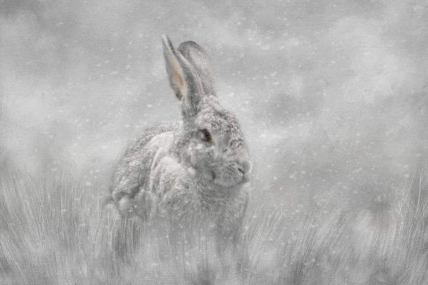 Snow Bunny Poster