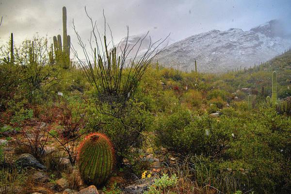 Snow In The Desert Poster