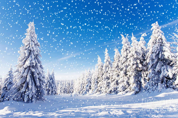 Snowfall In Amazing Winter Landscape Poster