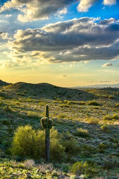 Sonoran Desert Portrait Poster