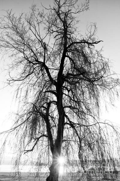 Spooky Abstract Black And White Tree Poster