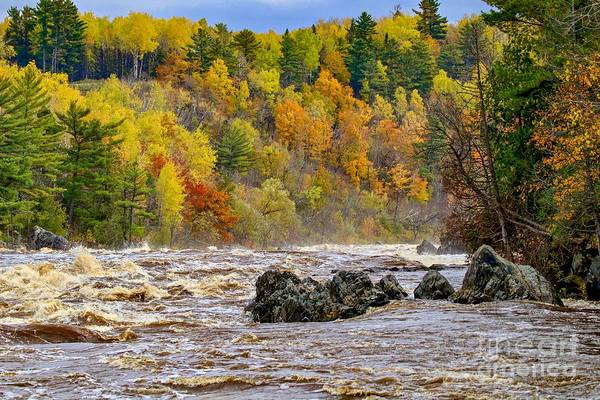 St. Louis River At Jay Cooke Poster