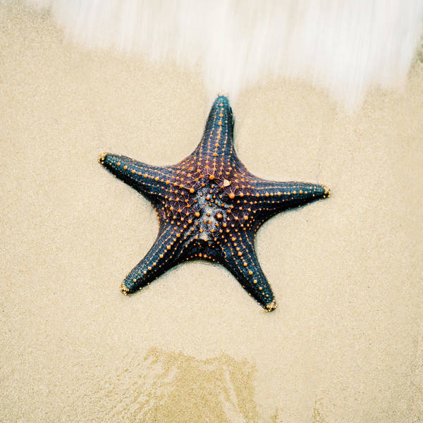 Starfish On The Beach Sand. Close Up. Poster