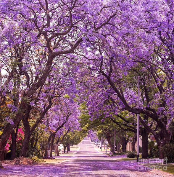Stunning Alley With Wonderful Violet Poster