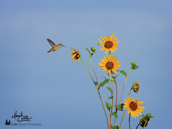 Summer Day Hummingbird Poster