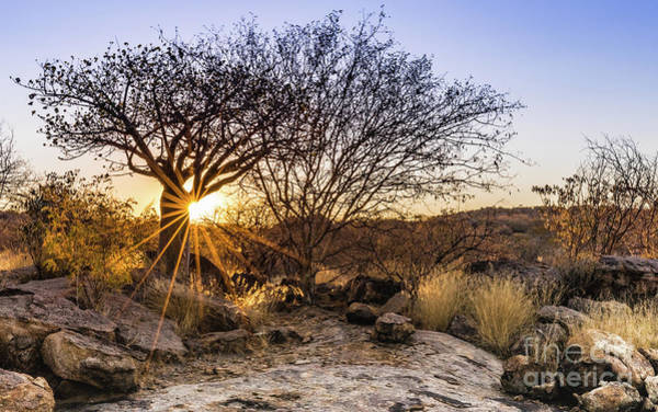 Sunset In The Erongo Bush Poster