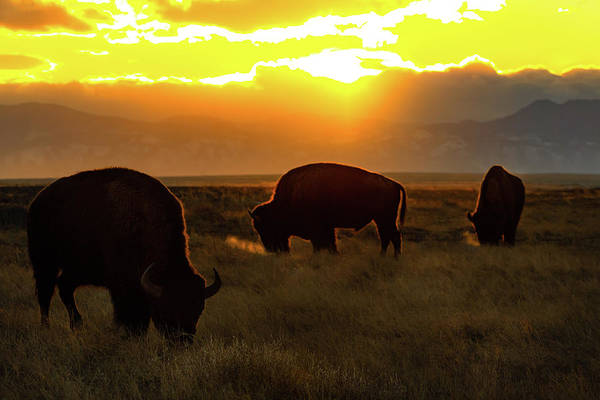 Sunset On The Plains Of Colorado Poster